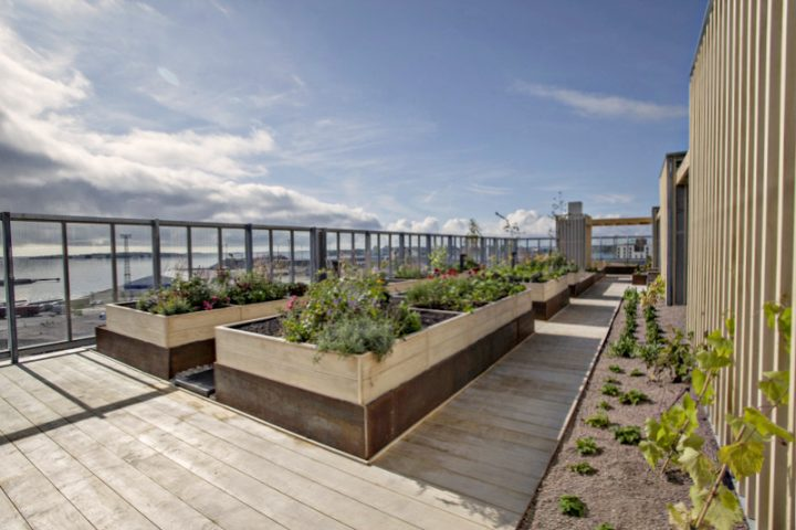 Rooftop kitchen garden, The Greenest Block of Flats